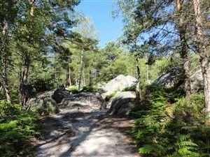 Petite promenade dans la forêt de Fontainebleau