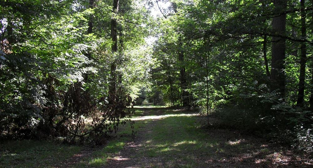 The  wooded area of the Park.