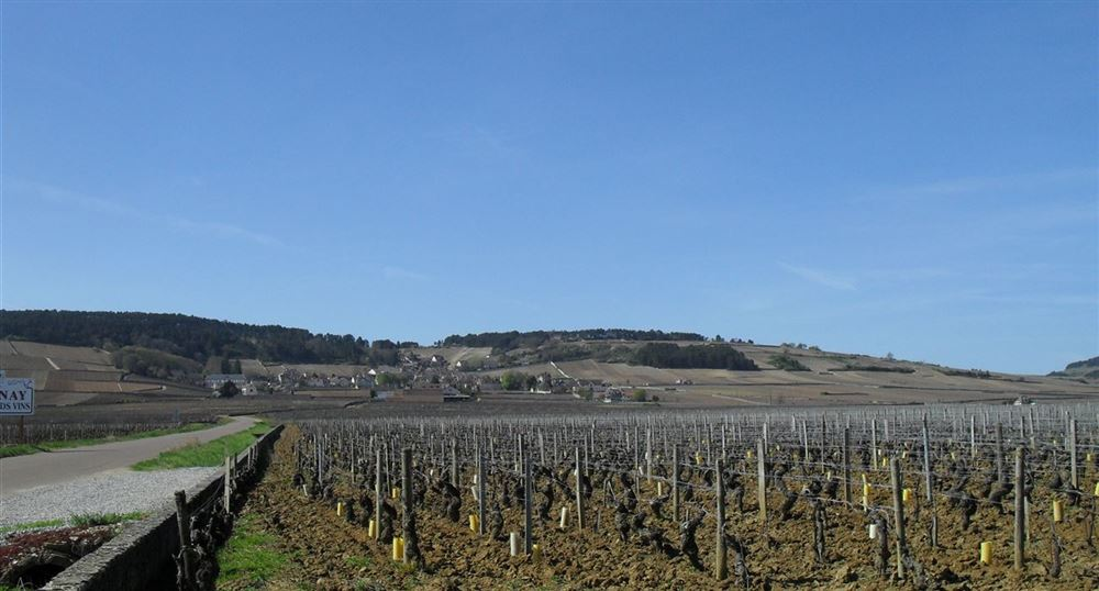 Typical landscape of the wine route