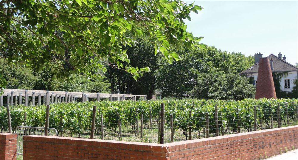 Passage prés des vignes