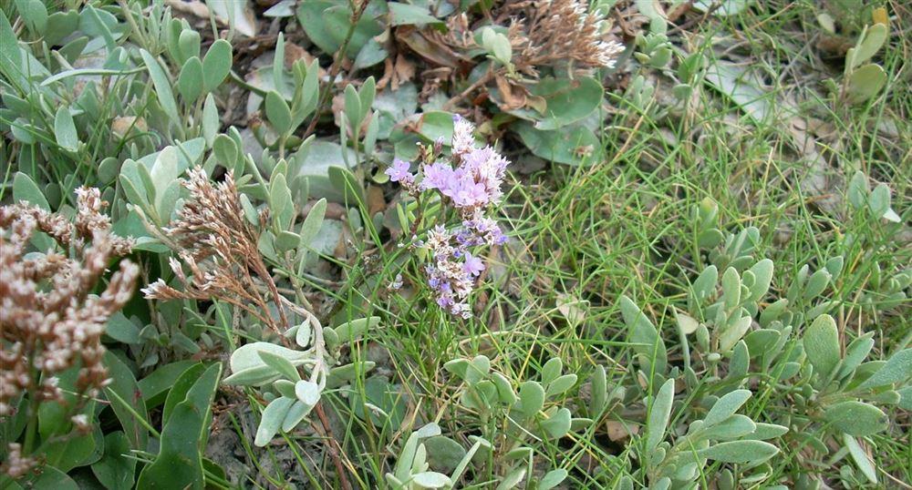 Échantillon de flore halophile