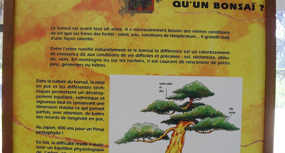 Panneau explicatif des bonsaïs