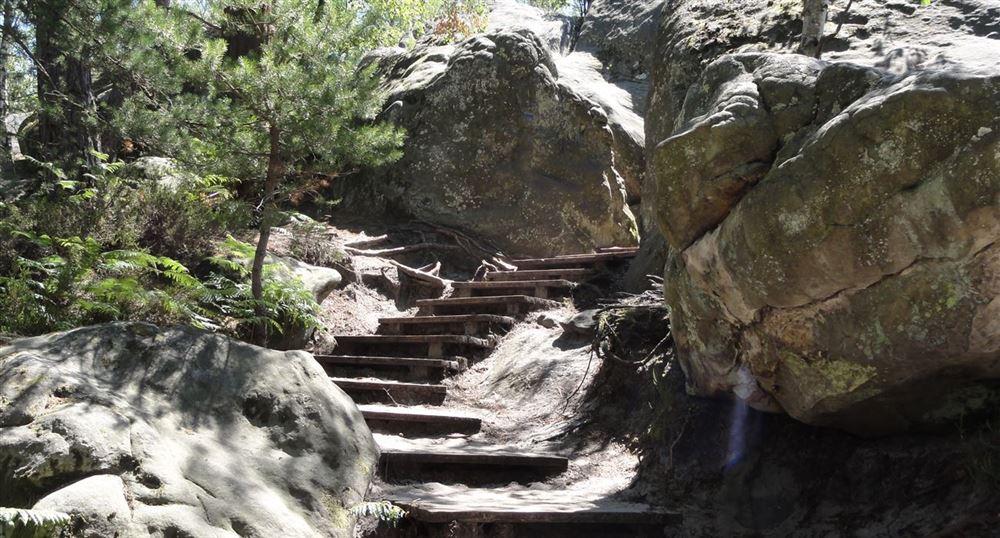 Départ de la randonnée en forêt