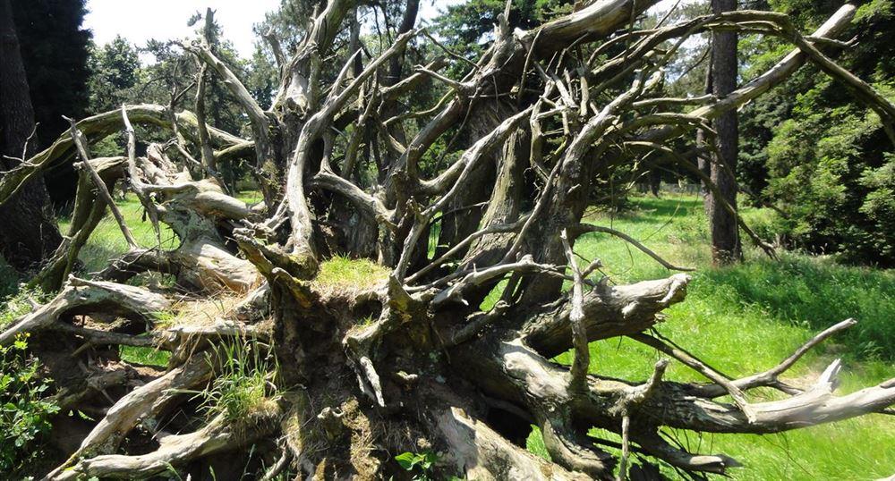 La souche d'un arbre