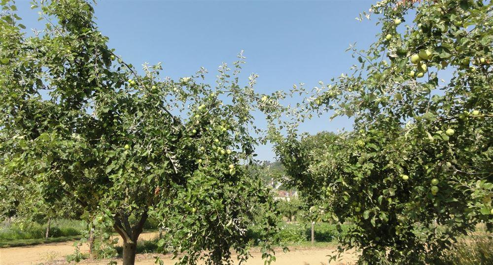 Le jardin potager-fruitier