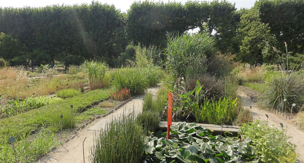 Le jardin du Jardin des plantes