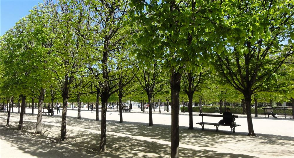 Under the lime trees of the Palais-Royal