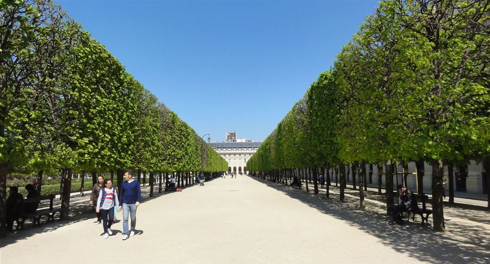Alley of trees in the gardens of the Palais-Royal