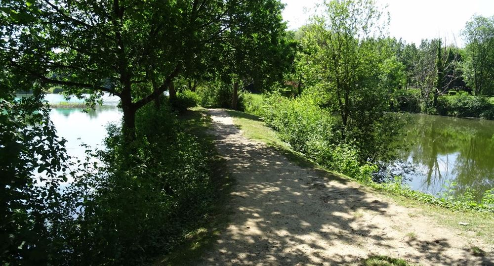 Path between the ponds