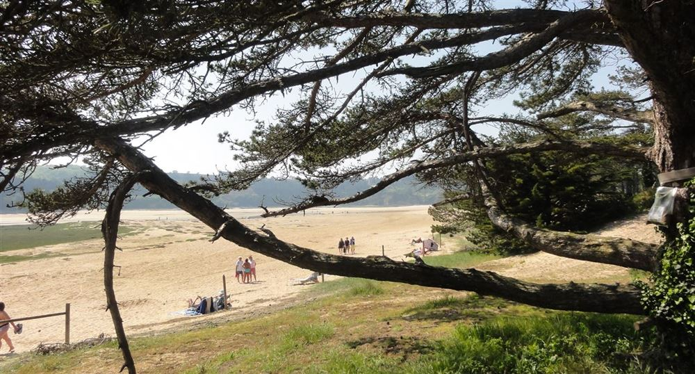 The pine trees along the estuary