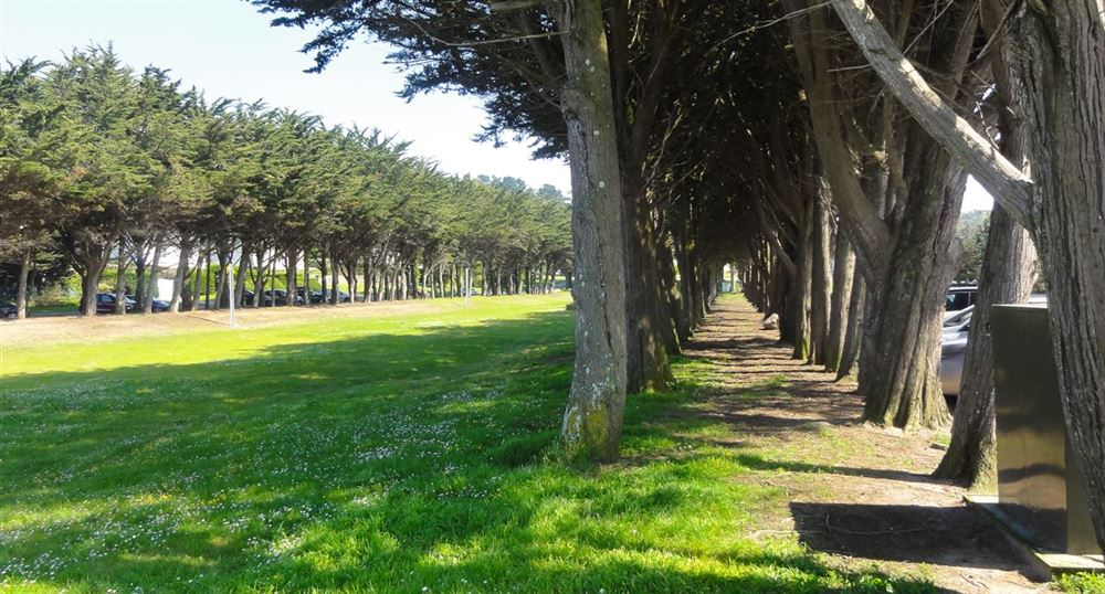 The aisle of pines