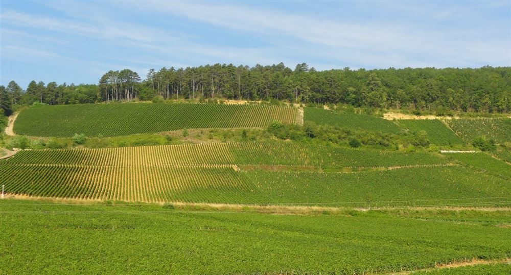 Typical landscape of the road of the wines in Burgundy