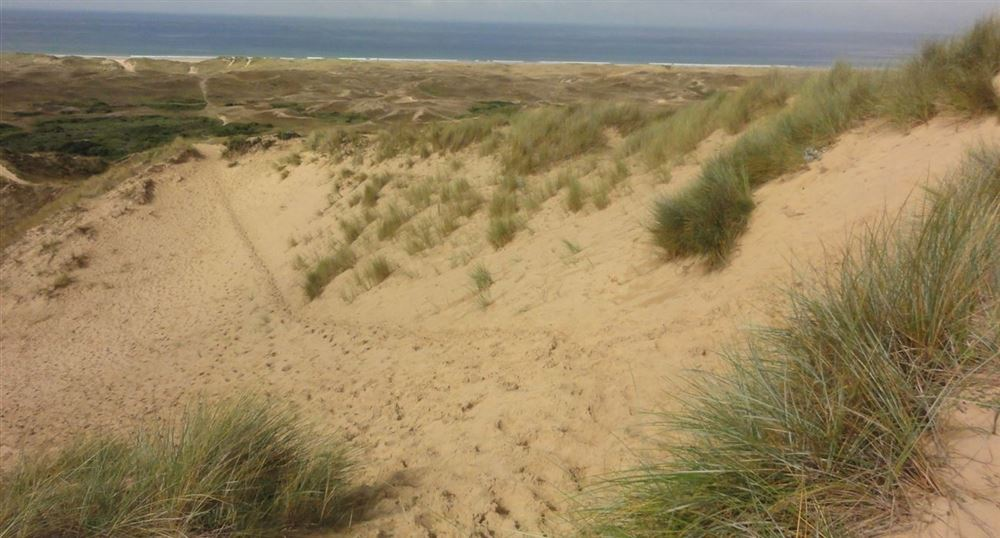 The path in the dunes