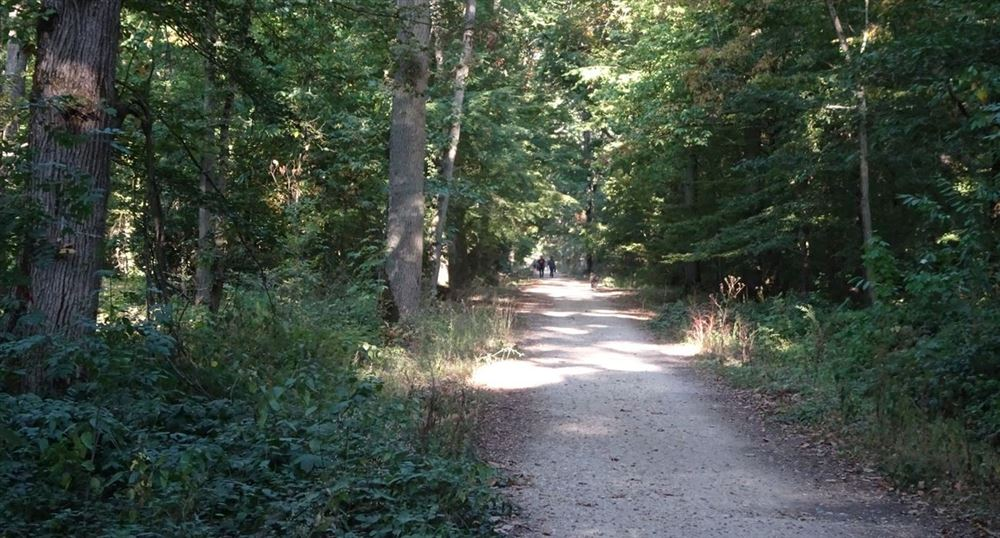 Le chemin vers l'abbaye de Port-Royal des Champs