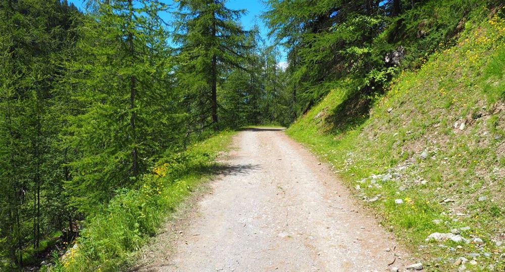 La route forestière