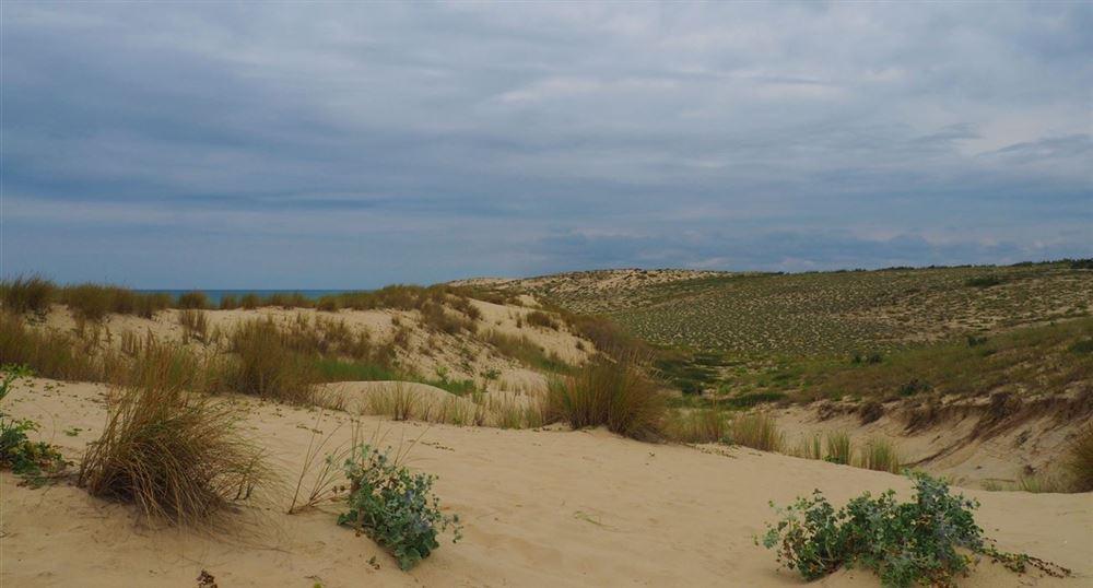 La plage des Dunes au Cap Ferret