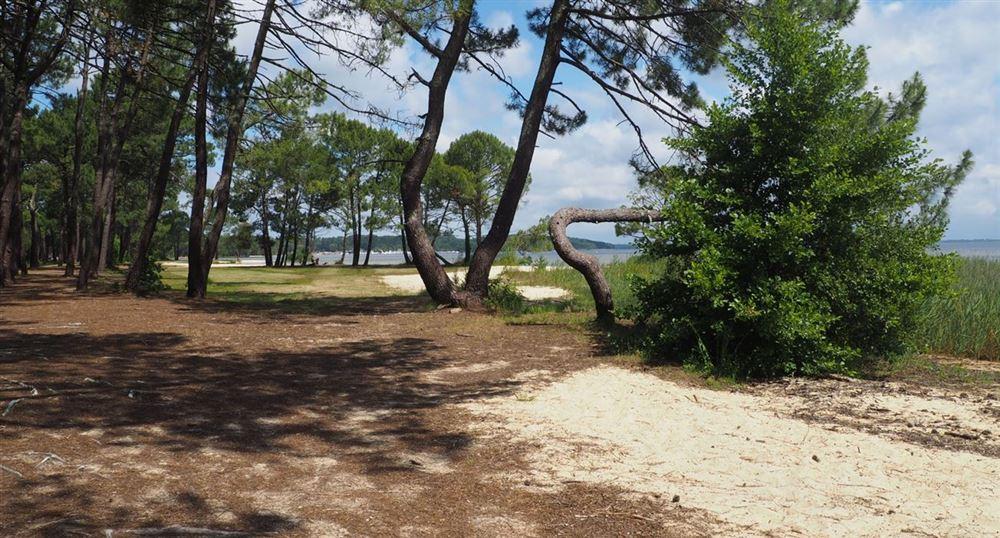 Le long du lac de Biscarosse