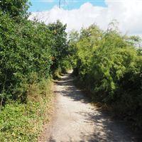 Promenade autour de la réserve ornithologique du Teich